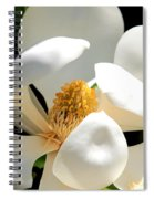 Magnolia Magic Spiral Notebook