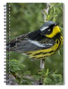 Magnolia Warbler Spiral Notebook