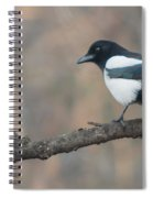 Magpie Perched On Twig Spiral Notebook