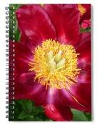 Mahogany Peony Spiral Notebook