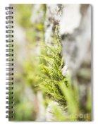 Maiden-hair Spleenwort Spiral Notebook