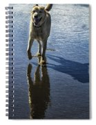 Maisie At The Beach Spiral Notebook