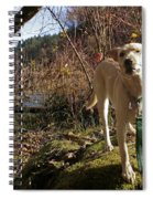Maisie On A Rock Spiral Notebook