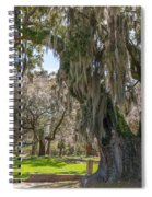 Majestic Live Oak Tree Spiral Notebook