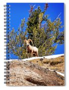 Majestic Big Horn Sheep Spiral Notebook