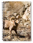 Majestic Bighorn Spiral Notebook