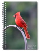 Majestic Cardinal Spiral Notebook