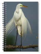 Majestic Great Egret Spiral Notebook