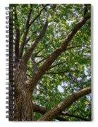 Majestic Oak Spiral Notebook