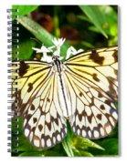 Malabar Tree Nymph Butterfly Spiral Notebook