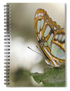 Malachite Butterfly Spiral Notebook