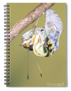 Malachite Butterfly Emerging 4 Of 6 Spiral Notebook
