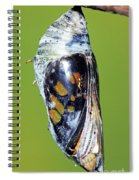 Malachite Butterfly Metamorphosis Spiral Notebook