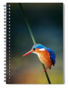 Malachite Kingfisher Spiral Notebook