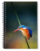 Malachite Kingfisher Spiral Notebook