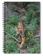 Malayan Tiger Spiral Notebook
