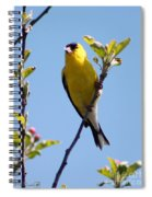 Male American Goldfinch Gathering Feathers For The Nest Spiral Notebook