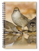 Male And Female Eurasian Blackcaps Spiral Notebook