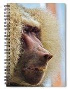 Male Baboon Spiral Notebook
