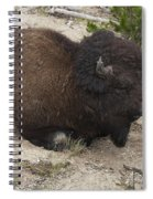 Male Buffalo At Hot Springs Spiral Notebook