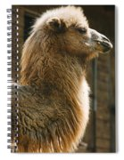 Male Camel Head Spiral Notebook