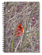 Male Cardinal Cold Day 2 Spiral Notebook