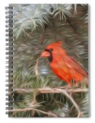 Male Cardinal In Spruce Tree Spiral Notebook