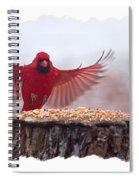 Male Cardinal Landing  Spiral Notebook