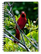 Male Cardinal Spiral Notebook