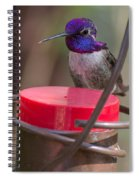 Male Costa Hummingbird Spiral Notebook