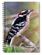 Male Downy Woodpecker Spiral Notebook