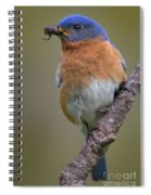 Male Eastern Bluebird With Spider Spiral Notebook