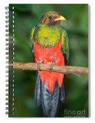 Male Golden-headed Quetzal Spiral Notebook