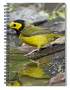 Male Hooded Warbler Spiral Notebook