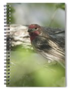 Male House Finch Spiral Notebook