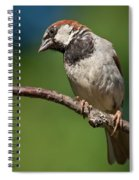 Male House Sparrow Perched In A Tree Spiral Notebook
