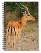 Male Impala With Horns Spiral Notebook