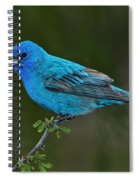 Male Indigo Bunting Spiral Notebook