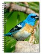 Male Lazuli Bunting Passerina Amoena Spiral Notebook