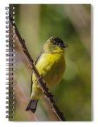 Male Lesser Goldfinch Spiral Notebook