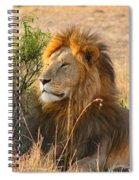 Male Lion Spiral Notebook