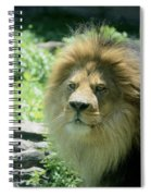 Male Lion Up Close Spiral Notebook