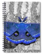 Male Moth - Brilliant Blue Spiral Notebook
