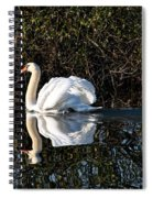 Male Mute Swan Spiral Notebook