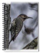 Male - Northern Flicker Spiral Notebook