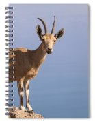 Male Nubian Ibex 1 Spiral Notebook