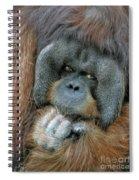 Male Orangutan  Spiral Notebook