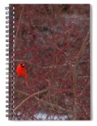 Male Red Cardinal In The Snow Spiral Notebook