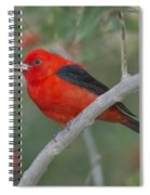 Male Scarlet Tanager Spiral Notebook