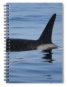 Male Transient Orca In Monterey Bay 11-10-13 Spiral Notebook
